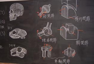 骨学の黒板絵
